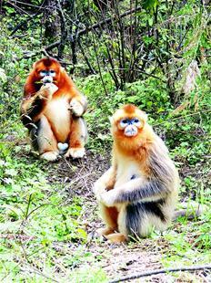 湖北省25种国家一级保护野生动物