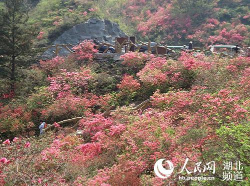 木兰花园五千亩玫瑰