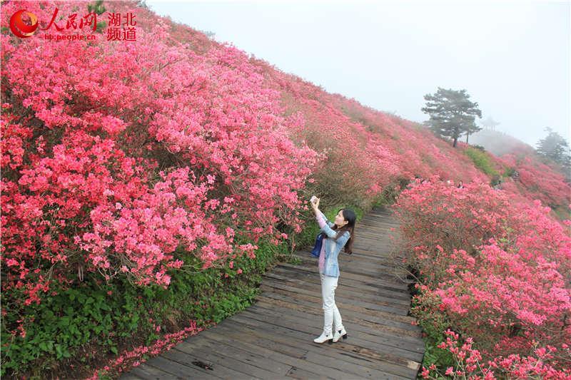 龟峰山风景区为迎接赏花旺季到来