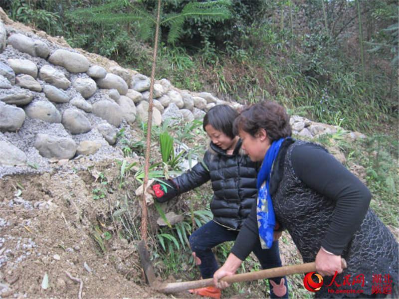 湖北鹤峰白族乡小学生邀爸爸小学种两棵树--湖妈妈记叙作文毕业图片