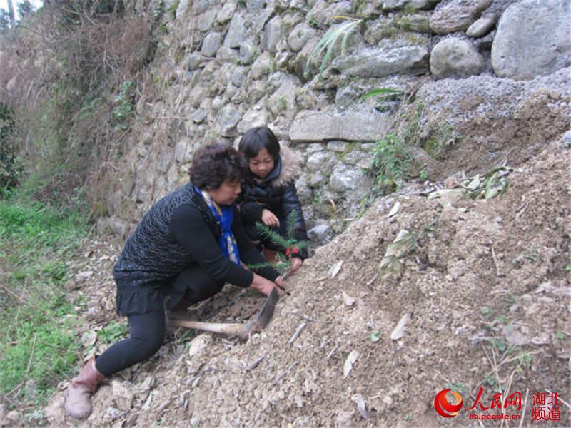 湖北鹤峰白族乡小学生邀爸爸妈妈种两棵树--湖表现a爸爸小学生图片
