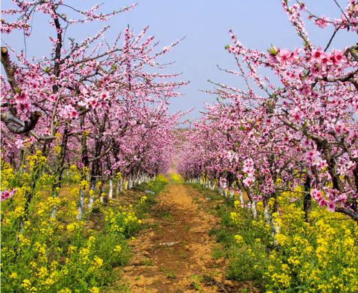 西丰桃沅旅游风景区