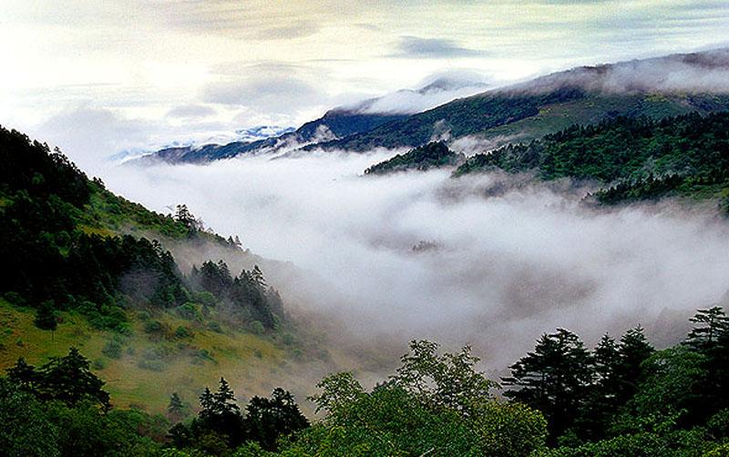 人们常说神农架地无三尺平,抬头见高山,其实,神农架拥有一块鲜为人知的、神奇的高山平原大九湖。大九湖是一片沼泽地山涧盆地,是亚高山的一片湿地。面积3万多亩,海拔1700米,面积36平方公里,南北长约15公里,东西宽约3公里,中间是一抹17平方公里的平川,四周高山重围,在抬头见高山,地无三尺平的神农架群山之中,深藏着这样的处女平地极为少见,大九湖因其享有高山平原的美誉,并被大九湖称为湖北的呼伦贝尔、神农江南。 神农架大九湖国家湿地公园位于鄂西,为亚高山盆地地,由大巴山东延的余脉组成。