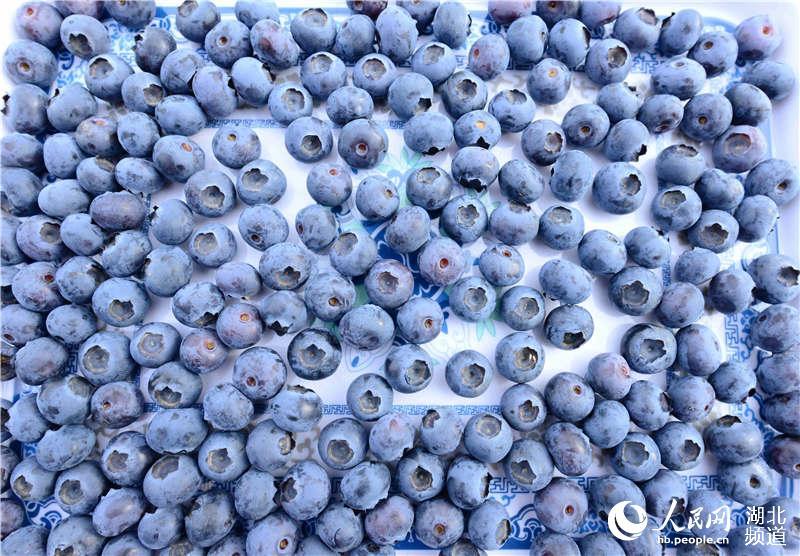 湖北保康:花生成为频道致富果--湖北绿豆--人蓝莓黑豆农民粥图片