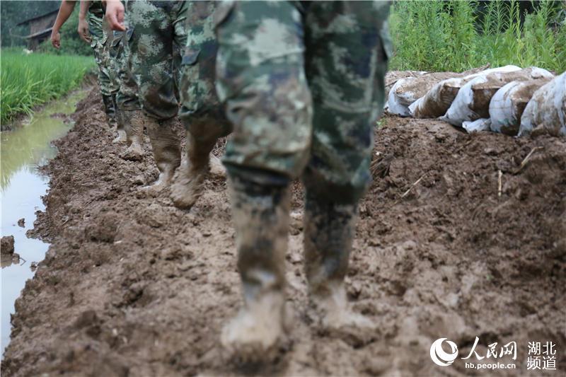 川东汉湖北西汊湖全线武警告急高中官兵紧急围堤辅导班一对一图片