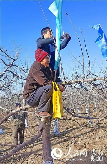 听专家教授讲授如何为苹果树剪枝.这是湖北新洋丰举办的苹果冬剪