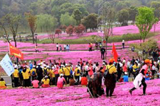 中国车都国际徒步大会在汉举行 5000市民漫步十里芝樱花海