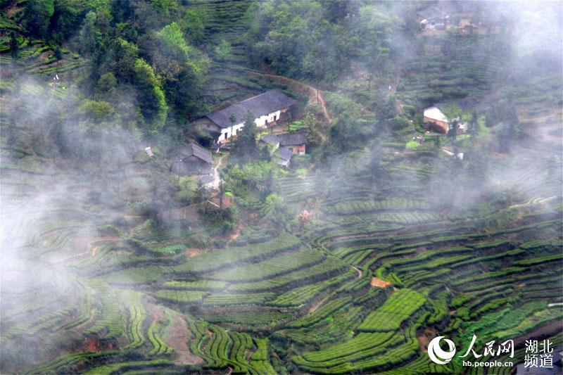 三峡库区沿岸生态美 云雾缭绕乡村似仙境