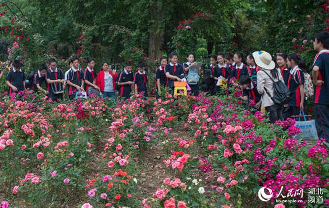 武汉:30万中小学生将进公园上生态研学旅行课