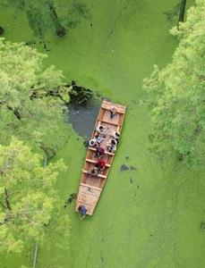 涨渡湖湿地:水上森林风景如画