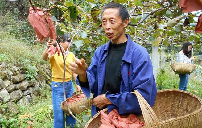 湖北宜昌:乡村晒丰收