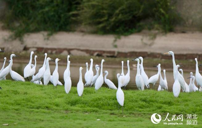 湖北已划建282处野生动物保护地 倡议共同守护候鸟安全