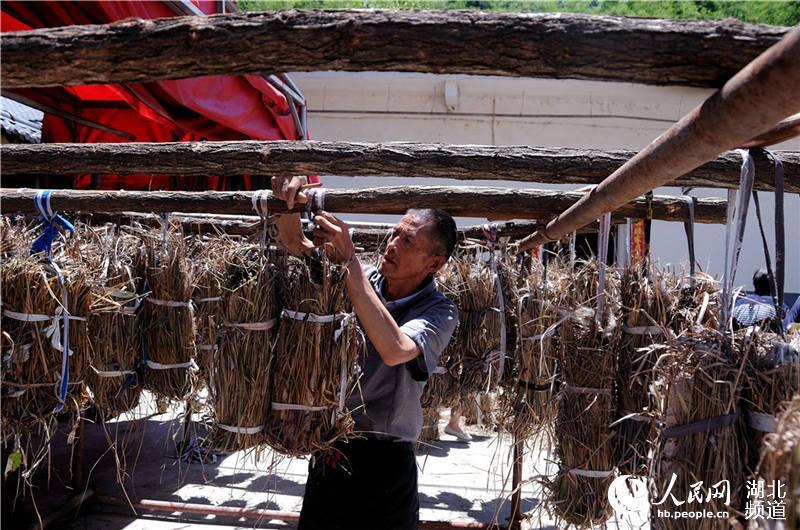 图为赵学茂正把用茅草包好的黄酒曲放在通风处发酵。