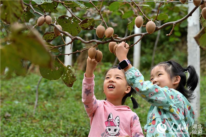 9月14日,小朋友在湖北省保康县黄堡镇百峰坪村猕猴桃种植基地采摘猕猴桃。