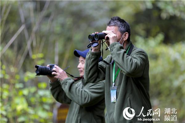 """第二届""""神农架国家公园杯""""观鸟大赛举行 百余观鸟爱好者秘境寻踪"""